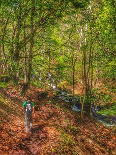 Bosque encantado de Carlac Val d'Aran