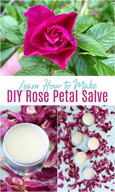 Learn how to make rose petal oil and click to find the recipes and steps to turn this rose petal infused oil into DIY rose petal salve for skin and DIY rose petal lip balm. I'll show you how to make rose petal salve - it's so easy! - and explain the benefits of rose oil for skin. If you're looking for rose petal uses, here's a great way to use rose petals from your backyard or dried rose petals. You'll love the moisturizing properties of rose petal oil.
