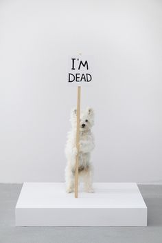 i'm dead #taxidermy #animal #fox