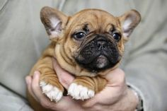 """A """"Pawsitive"""" Start: New Puppy Care Checklist and Recommendations"""