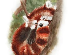 """Check out new work on my @Behance portfolio: """"Red panda"""" http://be.net/gallery/33402895/Red-panda"""