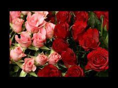 ДЛЯ ТАТЬЯНЫ ВИДЕО - YouTube Rose, Flowers, Plants, Youtube, Pink, Roses, Florals, Plant, Flower