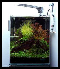 High tech nano tank #aquascaping #aquarium #aquariumcreation #plantedtanks #plantedtank #minimal #design #aquarioplantado #natureaquarium #instagood #foundonline #inspiring #fish #aquaplants #rareplants #ornamentalshrimp #shrimp #picoftheday