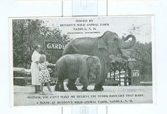 Vintage Bensons Wild Animal Farm Post Card Nashua New Hampshire | eBay