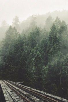 misty fog + evergreens