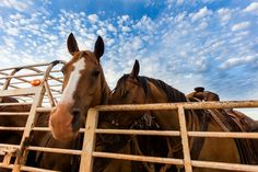#DidYouKnow We won an Equus Film Festival Winnie! ?utm_content=buffer19a2c&utm_medium=social&utm_source=www.pinterest.com/&utm_campaign=buffer #horselove | Photography by Jeremy Enlow