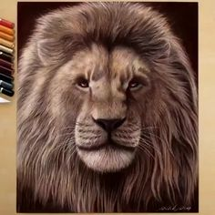 [New] The 10 Best Drawing Ideas Today (with Pictures) - by Shared by Use Painting Videos, Painting Techniques, Colorful Drawings, Cool Drawings, Lion Sketch, Watercolor Lion, Lion Drawing, Lion Painting, Lion Art