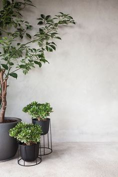 Do you HAVE? Wire Pot by Norm Architects