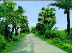 Banhladesh village road Toutist Places TOUTIST PLACES : PHOTO / CONTENTS  FROM  IN.PINTEREST.COM #TRAVEL #EDUCRATSWEB