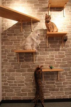diy wall shelves cat tower - lots of catio ideas Gato Bengali, Cat Perch, Cat Towers, Cat Shelves, Cat Enclosure, Cat Climbing, Cat Room, Pet Furniture, Cat Accessories