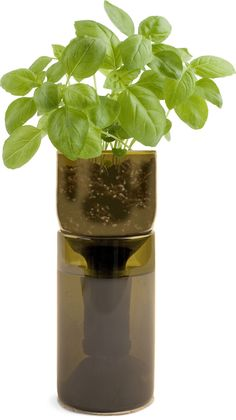 Grow Bottle Basil - Potting Shed Creations, LTD