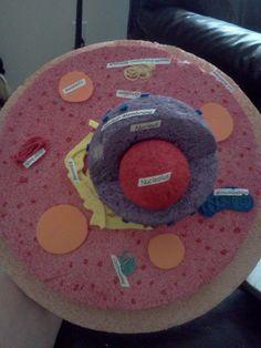 Cell model (5th grade Science)