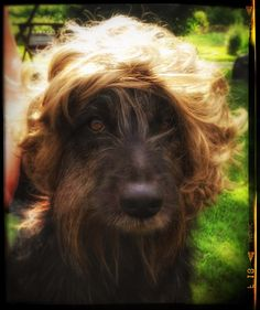 Armi vai Danny? Artist formerly known as Mosse. #t #pooch #mutt #dog Gettin wiggy zidit...  #fb