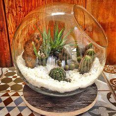 Olha que charme esse jardim ❤️Venha conhecer esse e outros na nossa lojinha❤️#decoration #deco #instadesign #instadecor #handmade #donafarinha#arte#lindo#plantas#jardim#terrarium #suculentas #cactus #cactusclub #cactuslove