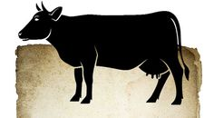 Explained: No-Beef Nation - Yahoo News India