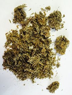 Wormwood - Artemisia capillaris - 1oz Bag * Check out this great product.