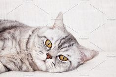 Cat by TalyaPhoto on @creativemarket