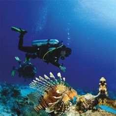 ACUBA DIVING AND SCUBA LESSONS