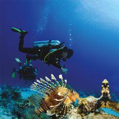 scuba diving | Scuba Diving