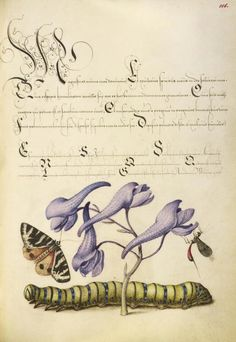 Joris Hoefnagel (illuminator)  [Flemish / Hungarian, 1542 - 1600], and Georg Bocskay (scribe)  [Hungarian, died 1575],                              Scarlet Tiger-Moth, Larkspur, Insect, and Caterpillar,                              Flemish and Hungarian, 1561 - 1562
