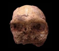 """Chinese archaeologists have discovered an """"uncommonly well-preserved"""" fossilized skull of homo erectus in east China, providing more valuabl. Peking Man, Human Fossils, Human Teeth, Early Humans, Human Evolution, Paleo, Animal Bones, Asian History, Human Skull"""