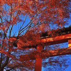 ~~ autumn at Mt Takao ~~