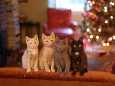 The Bartletts by laurie cinotto. Our foster kittens:  Georgie, Clarence, Marcel and Imogene Bartlett.