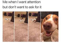 Animal Memes – 40 Pics #funnydogvideos