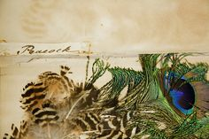 Bird Feather Scrapbook, 19th Century, Archives 2009-015, Academy of Natural Sciences, Philadelphia