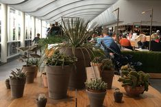 Copenhagen   Original Senses #copenhagen #originalsenses Luxury Travel, Copenhagen, Around The Worlds, The Originals, Plants, Plant, Planets