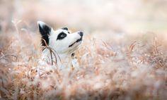 Amazing shot of Wapi a border collie @yummypets