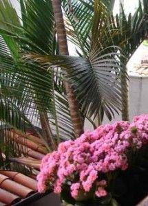 Planta para dentro de Casa:Tipo de Planta cultivar em lugar Pequeno
