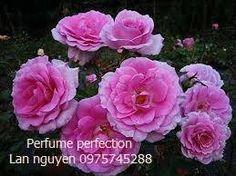 Perfum Perfection