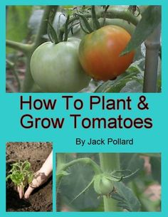 FREE TODAY    How to Plant and Grow Tomatoes - Kindle edition by Jack Pollard. Crafts, Hobbies & Home Kindle eBooks @ Amazon.com.