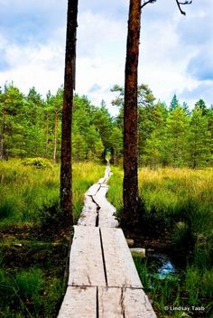 Viru Bog, Estonia and Beautiful World, Beautiful Places, Beautiful Pictures, Estonia Travel, Looks Cool, Where To Go, Travel Photos, Paths, Places To Visit
