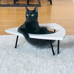 Cats love to sit in sinks, so the tripod was designed to create the same feeling. A clear plastic lounge pod makes the perfect place for kitty to curl up and metal hairpin legs give the tripod a Funny Cats, Funny Animals, Cute Animals, Baby Animals, Animal Fun, Animal Pics, Animal Memes, Cute Cats, Cat Perch
