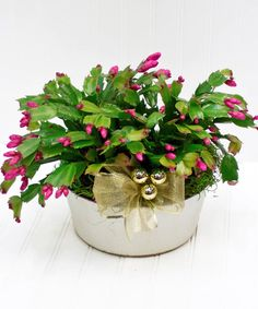A flowering live Christmas cactus is sure to make the holiday spirit last longer than the holidays themselves. Cut Flowers, Fresh Flowers, White Plains, Christmas Cactus, Flower Shops, Blossom Flower, Flower Delivery, Decking, Merry And Bright