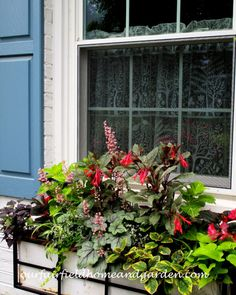 Summer Window Boxes ~ mixing annuals, houseplants and perennials for all-season impact – Our Fairfield Home & Garden