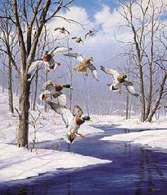 Winter Wonder - Mallards, by David Maass (American, b. 1929).