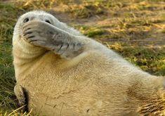 Les Comedy Wildlife Photography Awards récompensent les clichés d'animaux les plus comiques. Cette année, pas moins de 1 500 photographes amateurs ont soumis leurs images plus hilarantes les unes que les autres. Entre positions rocambolesques et visages amusants, SooCur...