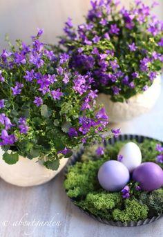 uova con campanula - Easter Table Displays
