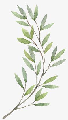 Leaves on a branch art print Watercolor Plants, Watercolor Leaves, Watercolor Paintings, Watercolour, Botanical Illustration, Botanical Prints, Leaf Art, Art Drawings Sketches, Flower Art