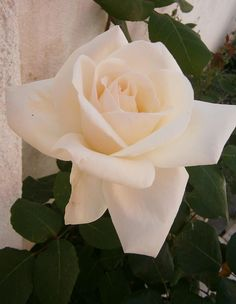 This domain used to be connected to a Wix website. Learn how to reconnect it, or create your own website. Create Your Own Website, Create Yourself, Rose, Flowers, Plants, Pink, Plant, Roses, Royal Icing Flowers