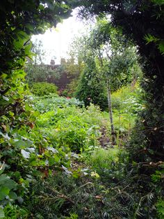 Helpful Advice And Tips On Organic Gardening