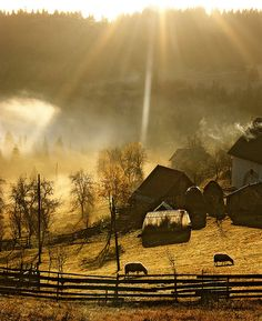 farm yard & sun rays