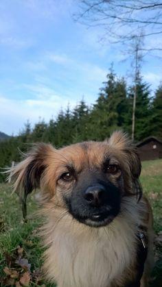 Zoeh. Mischlingshündin aus Spanien ist bei uns in der Hundetagesstätte.