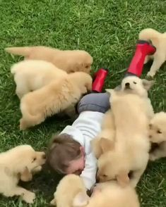 Things that make you go AWW! Like puppies, bunnies, babies, and so on. A place for really cute pictures and videos! Funny Animal Memes, Funny Animal Pictures, Cute Funny Animals, Cute Baby Animals, Cute Cats, Cute Pictures, Cute Puppy Videos, Cute Animal Videos, Mundo Animal