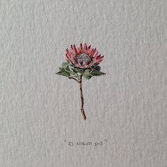 Day 234 : Officially the first time someone has booked a date in the series for their boss (just because they're awesome). 16 x 25 mm. (at Vredehoek) Cute Tattoos, Flower Tattoos, New Tattoos, Small Tattoos, Africa Tattoos, Native Tattoos, Protea Art, Protea Flower, Single Needle Tattoo