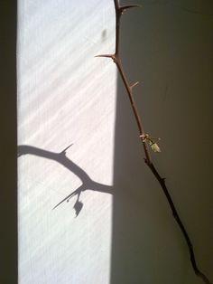 Pictures I Took - Taimaz Golzar