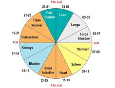 The Chinese Body Clock is a TCM approach to understand your body. By using the Chinese Meridian Clock you will see at what time a meridian is active.